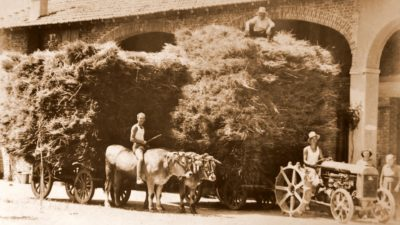 fattoria agricola la storia