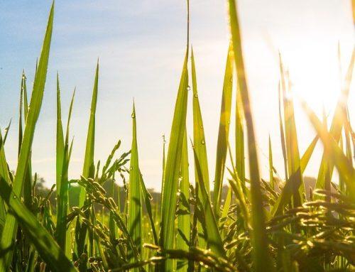 Agricoltura Km 0: una piacevole riscoperta