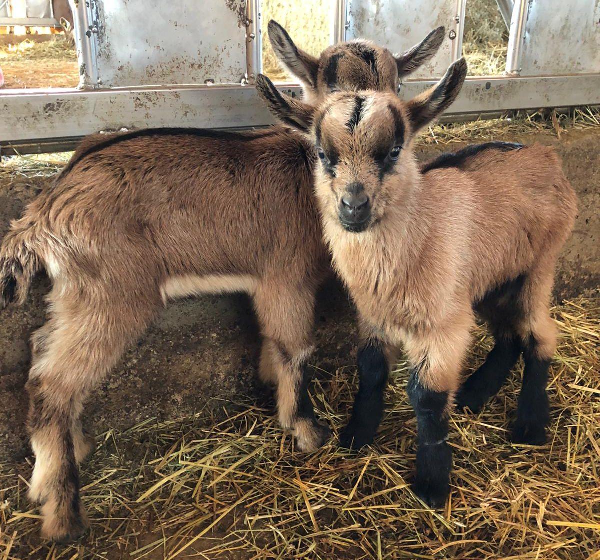 I nuovi piccoli della Fattoria!
